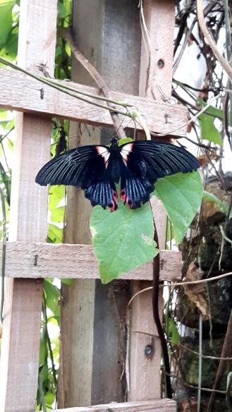 stratford-upon-avon_butterfly-2