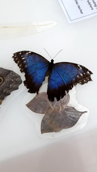 stratford-upon-avon_butterfly