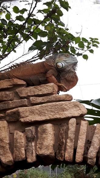 stratford-upon-avon_gecko